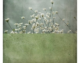 Pole Amande (Nature Photography - Fine Art Print - Flowers - Painting - Color Block - Grey - Green)