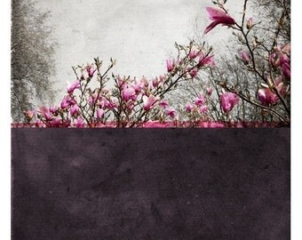 Pole Prune (Nature Photography - Fine Art Print - Floral - Blossoms - Botanical - Painting - Color Block - Purple - Pink)
