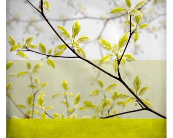 Ben branche  (Nature Photography - Fine Art Print - Botanical - Yellow Spring Branches)
