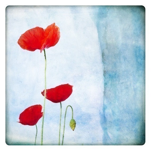 trio (Nature Photography - Fine Art Print - Poppy - Flowers -  Botanical - Country - Spring - painting - Red - aqua blue)