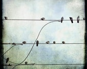 Blue Green Pigeon Wires Photograph--Why, Yes, That's An S--TTV Fine Art