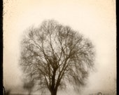 Sepia Tree Photograph--Lone Tree in Fog Sepia-- TTV Fine Art