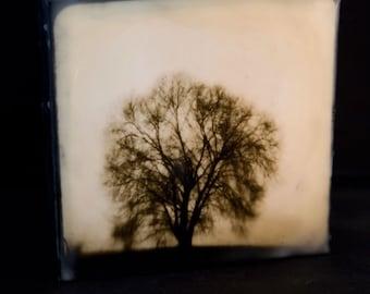 Lone Tree in Fog Sepia Encaustic 6x6 Wood Panel