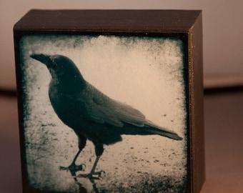 Black Crow Grounded 4x4 Original Fine Art Photograph on Wood Panel