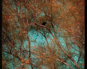 Crow Orange Turquoise Photograph--Crow Amongst the Blooms--TTV Fine Art