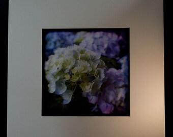 12x12 mat for 5x5 TTV Fine Art Photographs