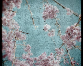 Pink Blue Blossom Photograph--Japanese Cherry Blossoms--TTV Fine Art