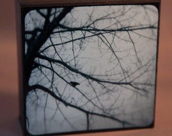 Crow Blue Photographon Wood Panel--Black Crow Resting--4x4 Fine Art