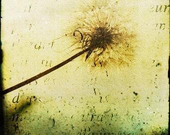 Yellow Green Dandelion Photograph--Un Peu de Duvet...A Bit of Fluff-- Fine Art