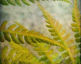Green Yellow Blue Fern Photograph--Young Ferns--Fine Art