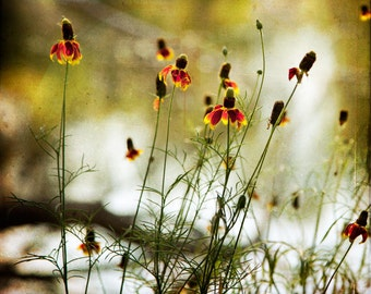 Red Green Gold Flowers Photograph--Wildflowers at the Lake--Fine Art