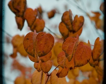 Blue Orange Leaves Photograph--Fall Colors-- TTV Fine Art