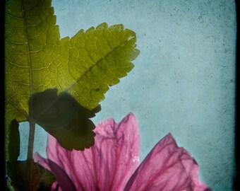 Blue Green Magenta Flower Leaf Photograph--Leaf with Wildflower--TTV Fine Art
