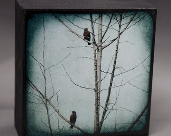Robins Blue Tree Photograph on Wood Panel--Two Bobbin Robbins--4x4 Fine Art