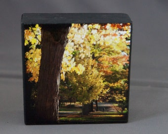 Autumn Leaves Yellow Orange Photograph on Wood--Autumn Stroll--4x4 Fine Art