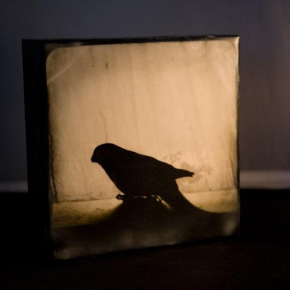 Bird Encaustic Photograph--Bird Silhouette II--6x6 Fine Art
