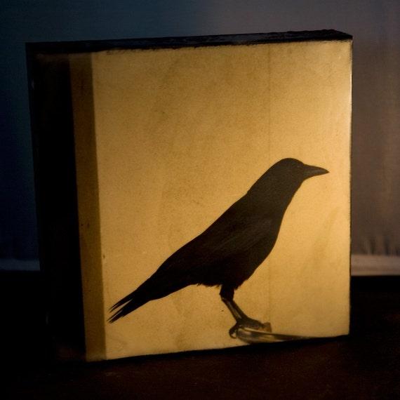 Honorable Crow 8x8 Encaustic Photograph on Wood Panel