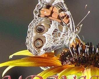 Butterfly and Sunflower Print Image