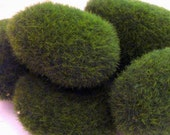 Green Fake Terrarium Moss Rocks for Miniature Garden and Floral Craft - Oceansupplies