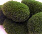 Green Fake Terrarium Moss Rocks for Miniature Garden and Floral Craft