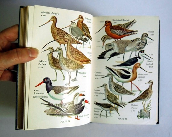 Vintage Bird Book Audubon Water Bird Guide 1951 by Pough