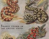 Vintage Snakes Alligators Book Page Print Illustration Set