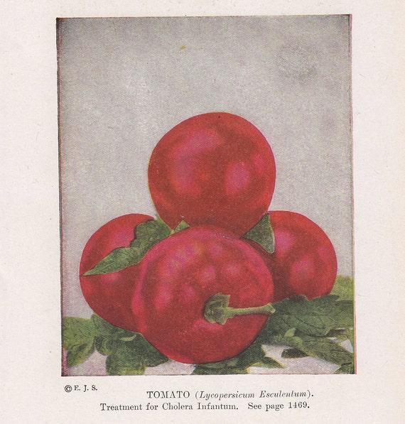 Antique Foods for Health - 1916 Book Pages Set - Color Fruit Vegetables