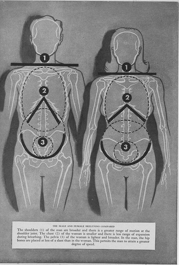 Vintage Medical Illustration Book Pages Set - Skeleton Circulation Pulse Rate