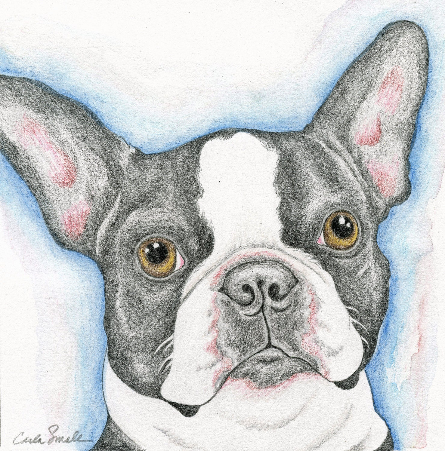 boston terrier drawings unavailable listing on etsy 6209