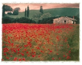 Poppies no.1, Original, Signed Fine Art Print matted to 8x10