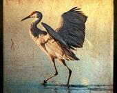 12x12 Fine Art Photographic Print (Dancing Crane)