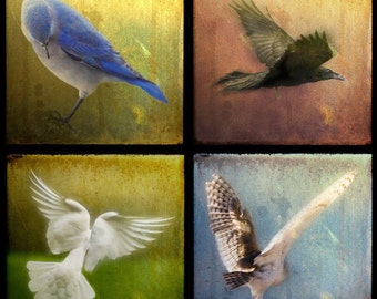 Your CHOICE of four 5x5 archival fine art TTV photographs (4 Birds shown).