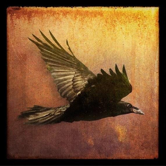 Raven at Sunset, 5x5 Fine Art Photograph