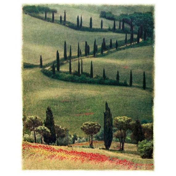Winding Cypress Orginal Signed Polaroid Transfer Composite