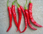 Organic Red Cayenne Chili Pepper Plant Heirloom Seeds