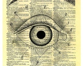 STUDY OF AN EYE  print of an original pencil and pen ANATOMICAL ILLUSTRATION ON AN OLD DICTIONARY PAGE
