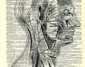 HEAD....  print of an original pencil and pen ANATOMICAL ILLUSTRATION ON AN OLD DICTIONARY PAGE