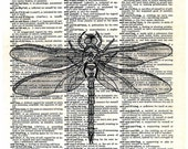 DRAGONFLY....  print of an original pencil and pen ANATOMICAL ILLUSTRATION ON AN OLD DICTIONARY PAGE