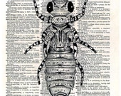 BEE....  print of an original pencil and pen ANATOMICAL ILLUSTRATION ON AN OLD DICTIONARY PAGE