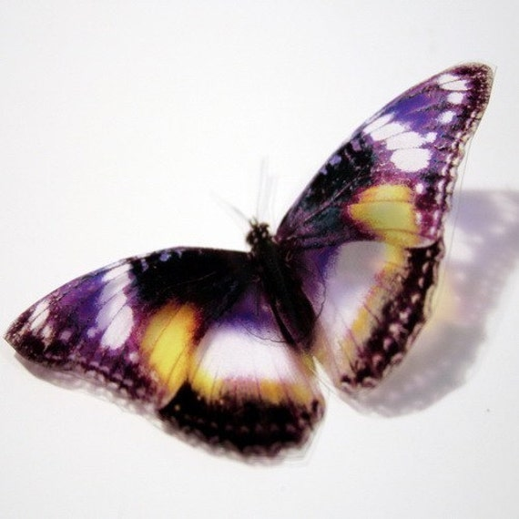 B004 - 6 x 3D Butterflies Suitable for Scrapbooking, Weddings and Decorations
