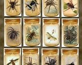 Set of 12 Creepy Crawly BUGS and SPIDERS IN A JAR Primitive Art Hang Tags