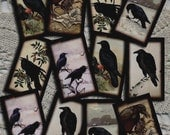 pRiMiTiVe Crow RaVeN Vintage Art Hang/Gift Tags/Cards/Labels -Printable Collage Sheet JPG Digital Download File-New Lower Price