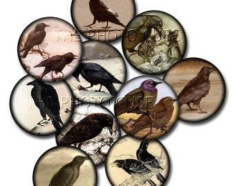 """CROWs Ravens Black Birds- 2"""" Vintage Primitive Graphics Circles-INSTaNT DOWNLoAD- Printable Collage Sheet  JPG Digital File"""