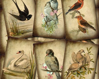 BIRDS In Nature- PRiMiTiVe Romantic Vintage ArT TaGS/CaRDS - Printable Collage Sheet Download JPG Digital File-New Lower Price