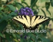Butterfly on Butterfly Bush -- Digital Image, Free Shipping (Via Email)