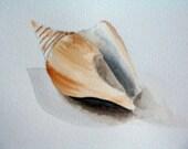 shell notecard