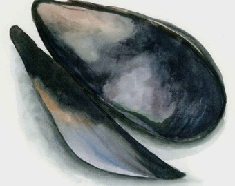 Mussel 8x10 watercolor print with white mat