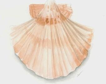 Scallop seashell 8x10 watercolor print