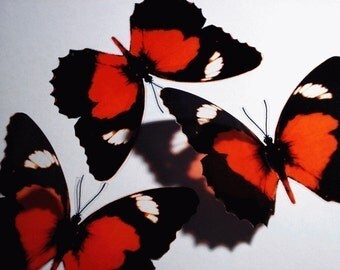 10 x 3D Butterflies - RED LACWING - Blood Red, Black colored Butterfly for Weddings Party Cake Table Pew Decoration Wall Art