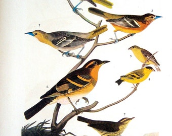 A Feathered Potpourri, Flycatchers and Vireo 1941 2 sided Audubon Birds Book Plate with names and Descriptions